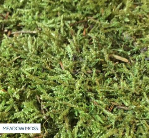 Meadow Moss