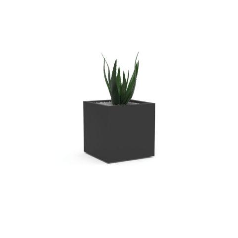 PLANTS-ALOE VERA