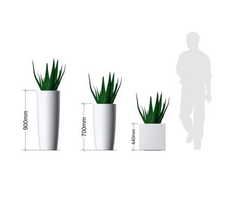 Aloe Vera Plant In Pot Planters Dimensions