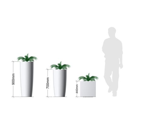 Cycas Palm Plant In Pot Planters