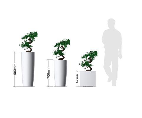 Bonsa Ficus Plant In Pot Planters Dimensions